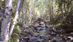 Carson Creek Monitoring site