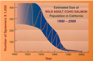 Chart of Decline of CCC Coho
